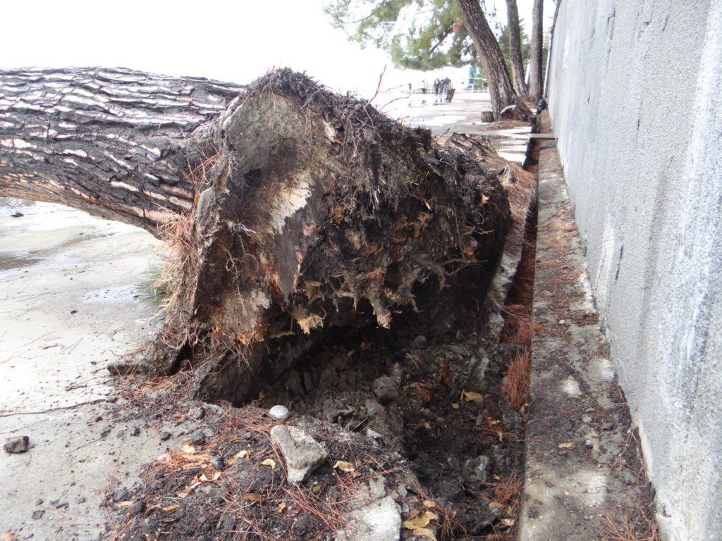 Градостроительный совет Сочи обсудил состояние каскада подпорных стен и зеленых насаждений на Приморской набережной