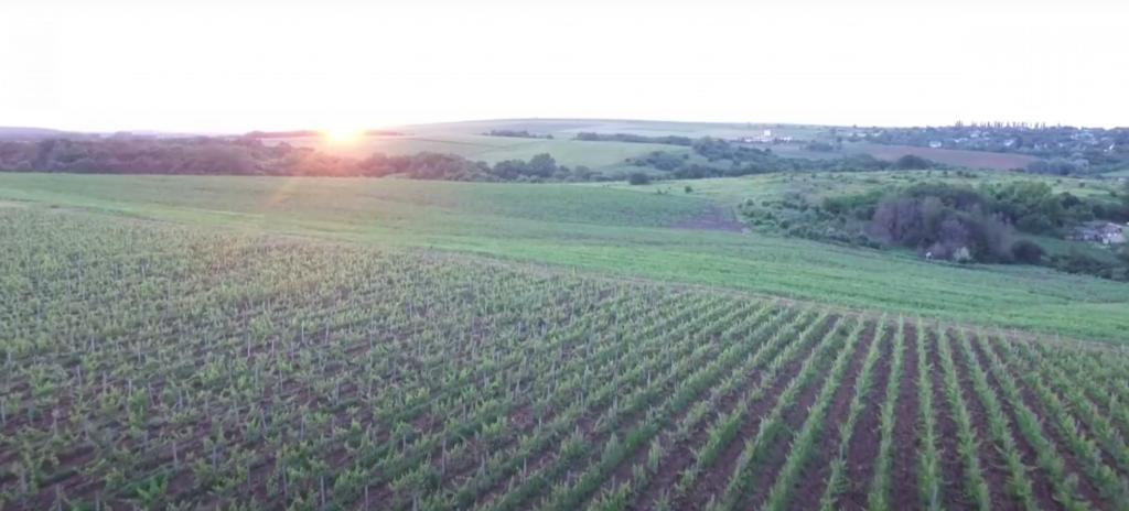 В Краснодарском крае планируют запретить перевод сельскохозяйственных земель под жилую застройку