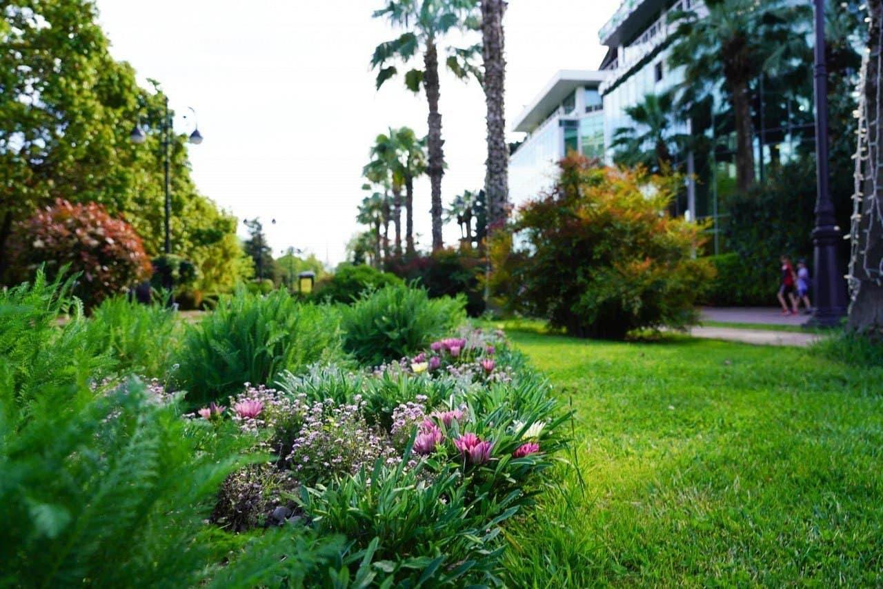 В Сочи станет обязательным высадка деревьев и кустарников при строительстве объектов